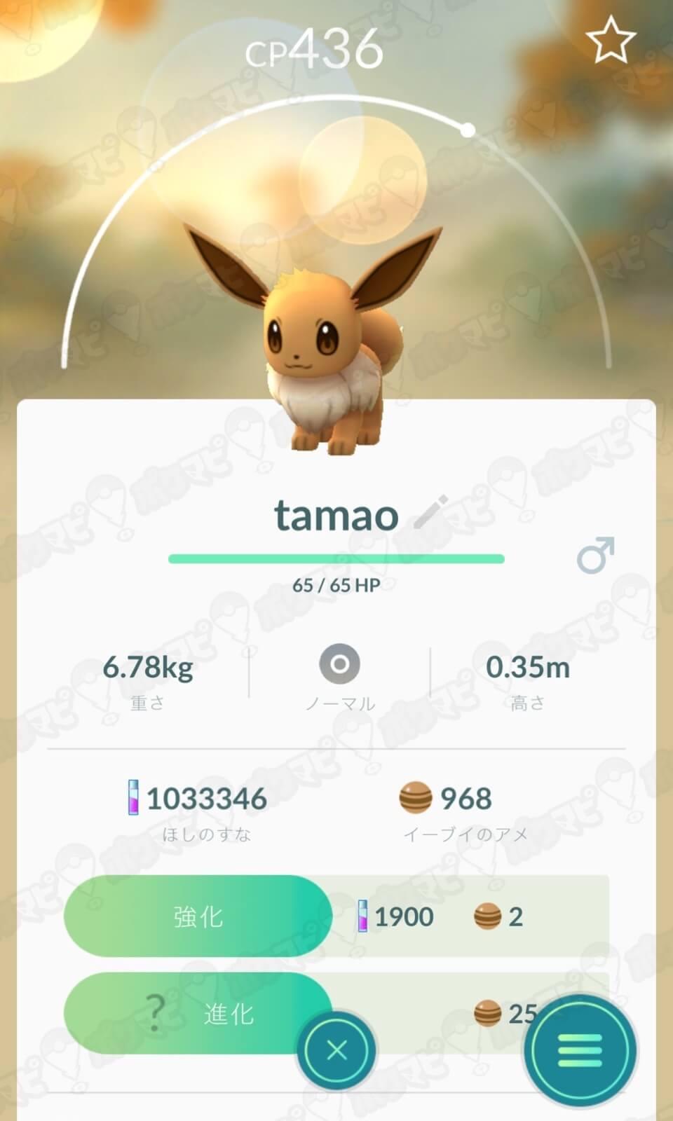 イーブイの名前をTamaoに