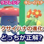 【ポケモンGO】クサイハナを進化させるなら、キレイハナとラフレシアどっちが正解?